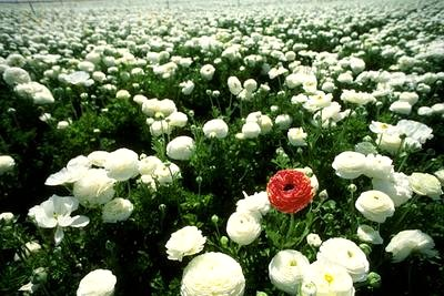 Fleurs_3